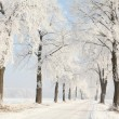 Stock Photo: Winter lane on a sunny morning