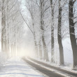 Winter lane on a foggy morning — Stockfoto