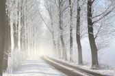 Winter lane op een mistige ochtend — Stockfoto