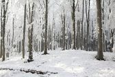 Winter beech forest on a sunny day — Stock Photo
