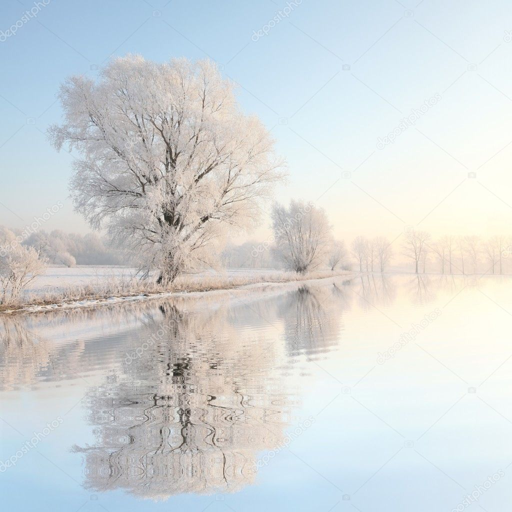 Frosty winter tree illuminated by the rising sun. — Foto de Stock   #5354827