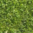 Wild grass texture that perfectly loop — Stock Photo