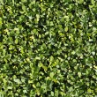 Green bush texture that perfectly loop - Stock Photo