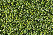 Green bush texture that perfectly loop — Stock Photo