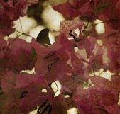 Red bougainvillea background — Stock Photo