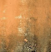 Terracotta wall with grunge mold border — Stock Photo