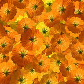 Orange and yellow flower flurry background — Stock Photo