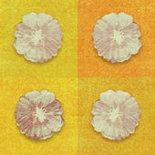 Flower print on yellow and orange background — Stock Photo