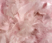 Fluffy pink feather background — Stock Photo
