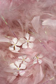 Fluffy pink feathers with white flowers — Stock Photo