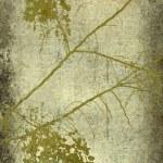 Grunge olive blossom branch print — Stock Photo