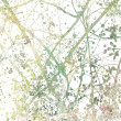 Stock Photo: Tangled Blossom Branches Art Abstract