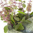 Ayurvedic Remedy Holy Basil or Tulsi in a Stone Pestle and Morta - Stock Photo