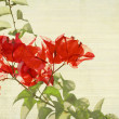 Red Bougainvillea Branch on Bamboo Background — Stock Photo