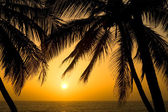 Tropical Palm Tree Sunset — Stock Photo