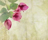 Bougainvillea artwork on cracked plaster background — Stock Photo