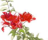 Red Flower And Foliage on Bamboo Background — Stock Photo