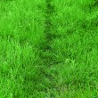 Foto Stock: Path trough fresh grown grass