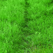 Stock Photo: Path trough fresh grown grass