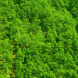 Forest top view — Stockfoto