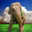 Stock Photo: Imposing elephant
