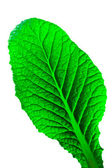 Leaf isolated — Stock Photo