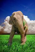 Imposing elephant — Stock Photo