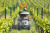 Framer is just spreading the dung with tractor in the vineyard — Stock Photo