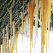 Brown icicles - Stock Photo
