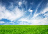 Field and sky - nature background — Stock Photo