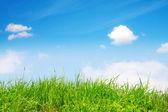 Springtime, green grass and sky — Stock Photo