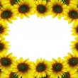 Beautiful sunflower frame — Stock Photo
