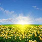 весенние луговые и солнце — Стоковое фото