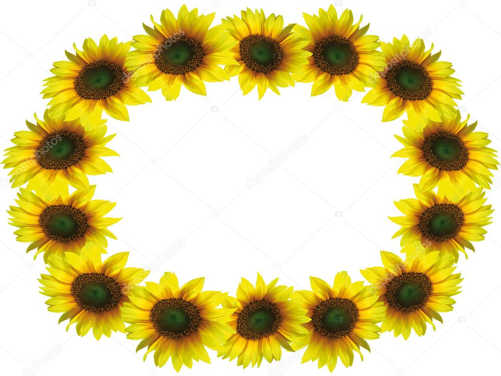 Sunflower Frame Sunflower Frame With Space For