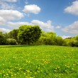 Stock Photo: Beautiful spring meadow