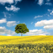 Lone tree landscape — Stock Photo