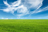 Blue sky and green grass — Stock Photo