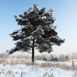Stock Photo: Snowy tree