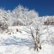 Winter scene — Stock Photo #4410282