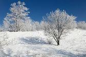 Güzel donmuş ağaçlar — Stok fotoğraf