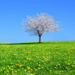 Blooming tree on a beautiful green meadow — Stock Photo