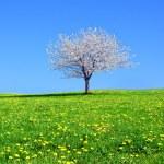 Blooming tree on a beautiful green meadow — Stock Photo