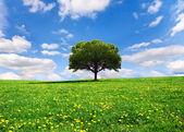 Prachtige lente landschap — Stockfoto