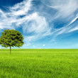 Landscape with a green tree — Stockfoto