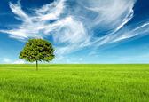 пейзаж с зеленое дерево — Стоковое фото