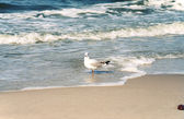 Beach and seagull — Stockfoto
