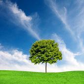 Zielony klon drzewo i niebieski niebo — Zdjęcie stockowe