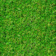 Beautiful green grass texture — Foto de Stock