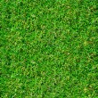 Beautiful green grass texture — 图库照片