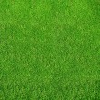 Green grass from golf course — Foto Stock